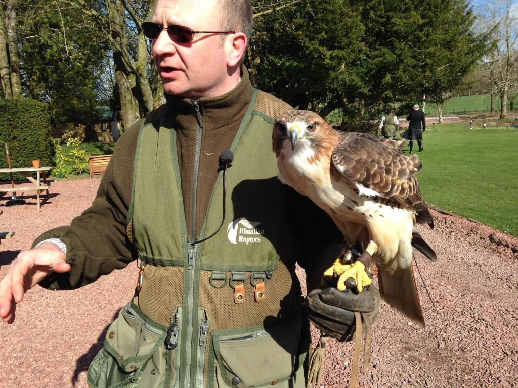 Rhuallan Raptors' Hawk